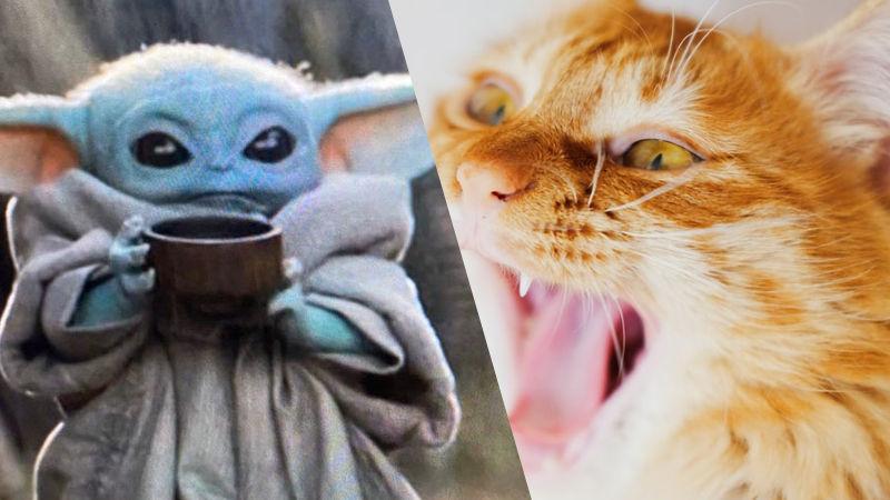 El Gato Baby Yoda enloquece a las redes sociales