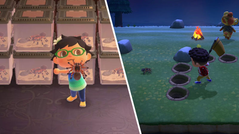 Isla Tarantulas Animal Crossing