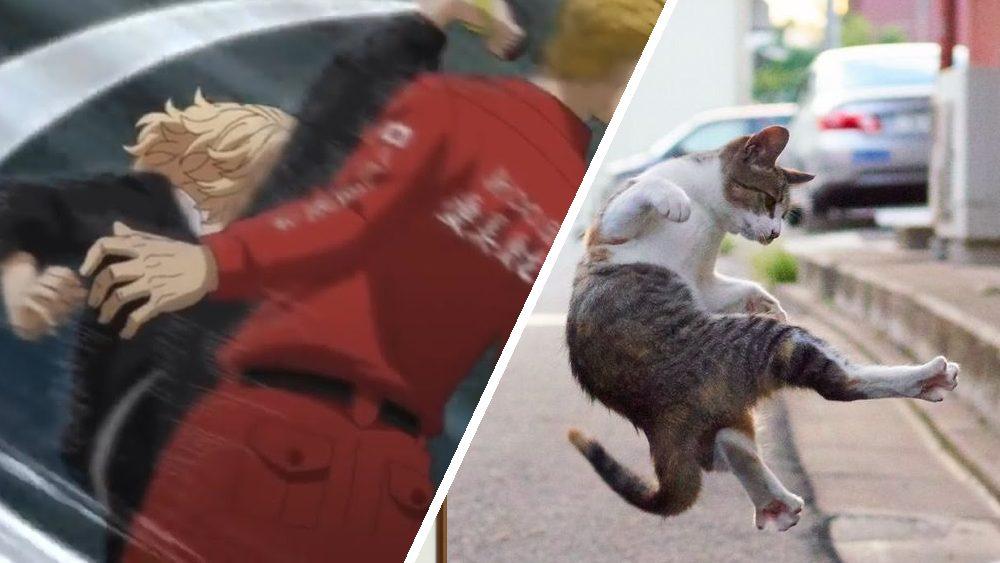 mikey tokyo manji gang cat