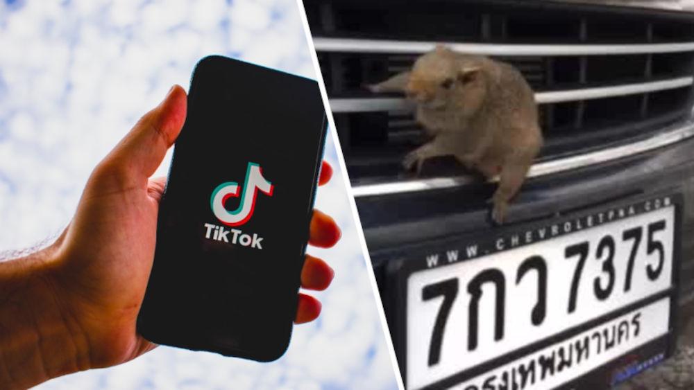 ¿Qué significa 7375 en TikTok?